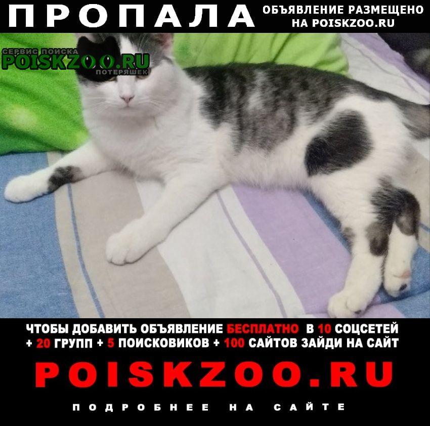Пропал кот Минск