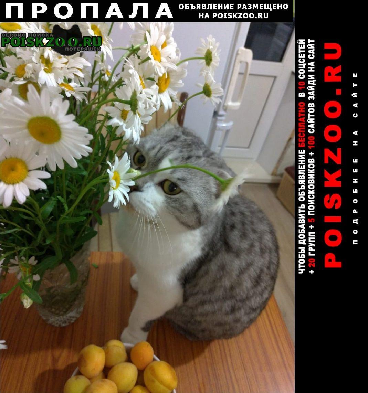 Осташков Пропала кошка неделю назад