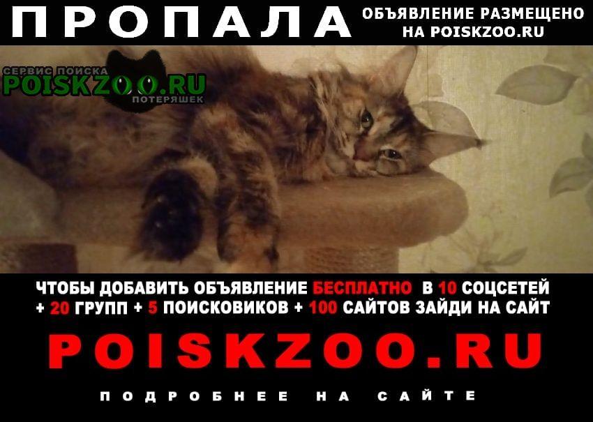 Пропала кошка кошечка мейн кун. Москва