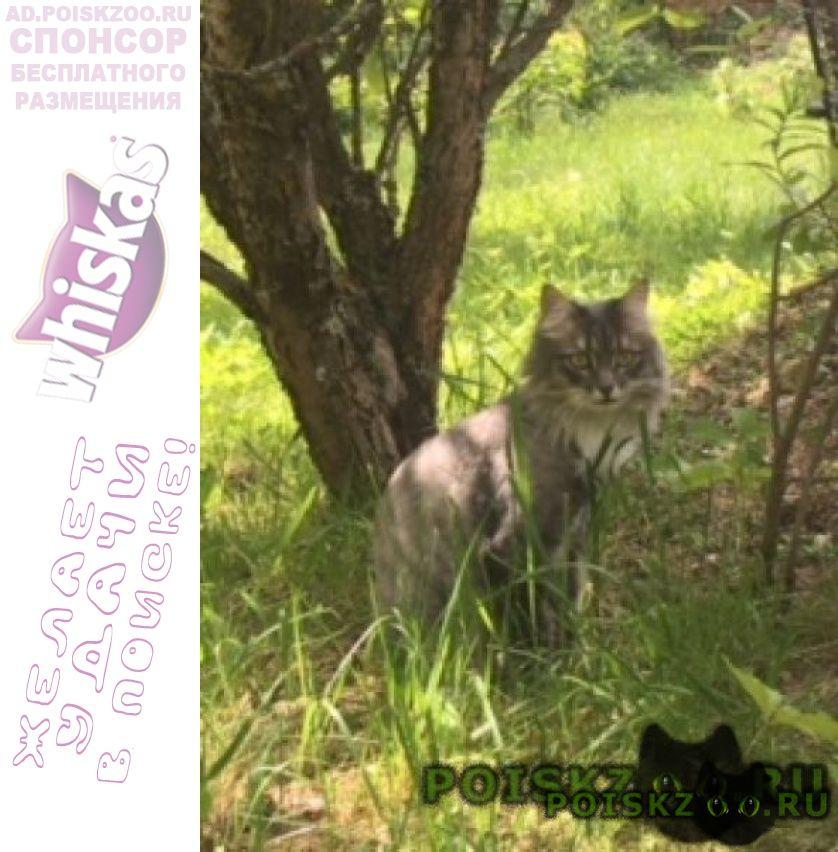 Пропал кот между орево и запрудней г.Дмитров