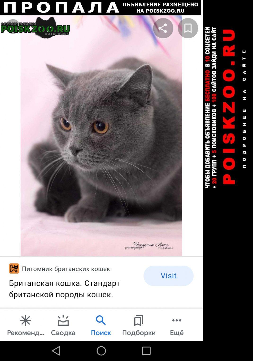 Пропала кошка британской породы Екатеринбург