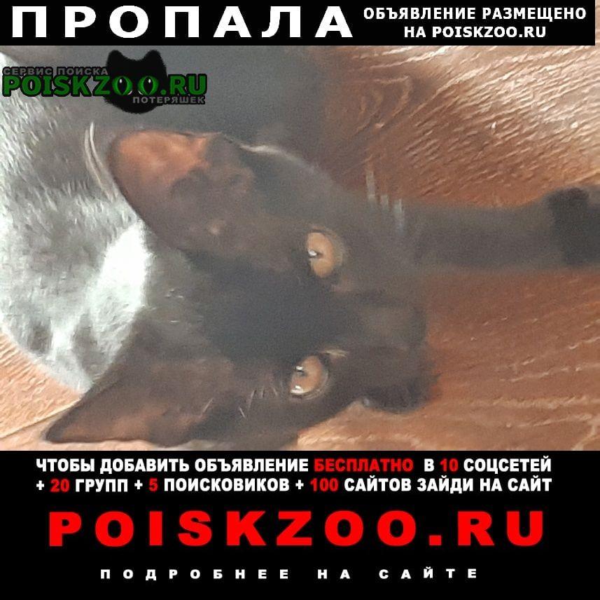 Пропала кошка Батайск