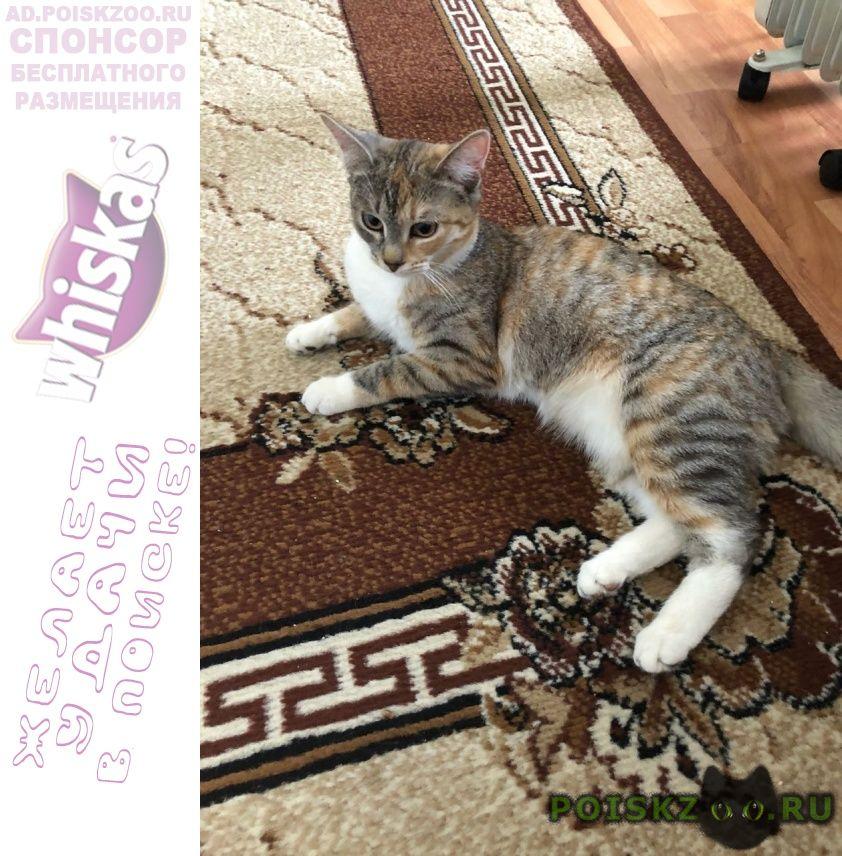 Пропала кошка г.Томилино