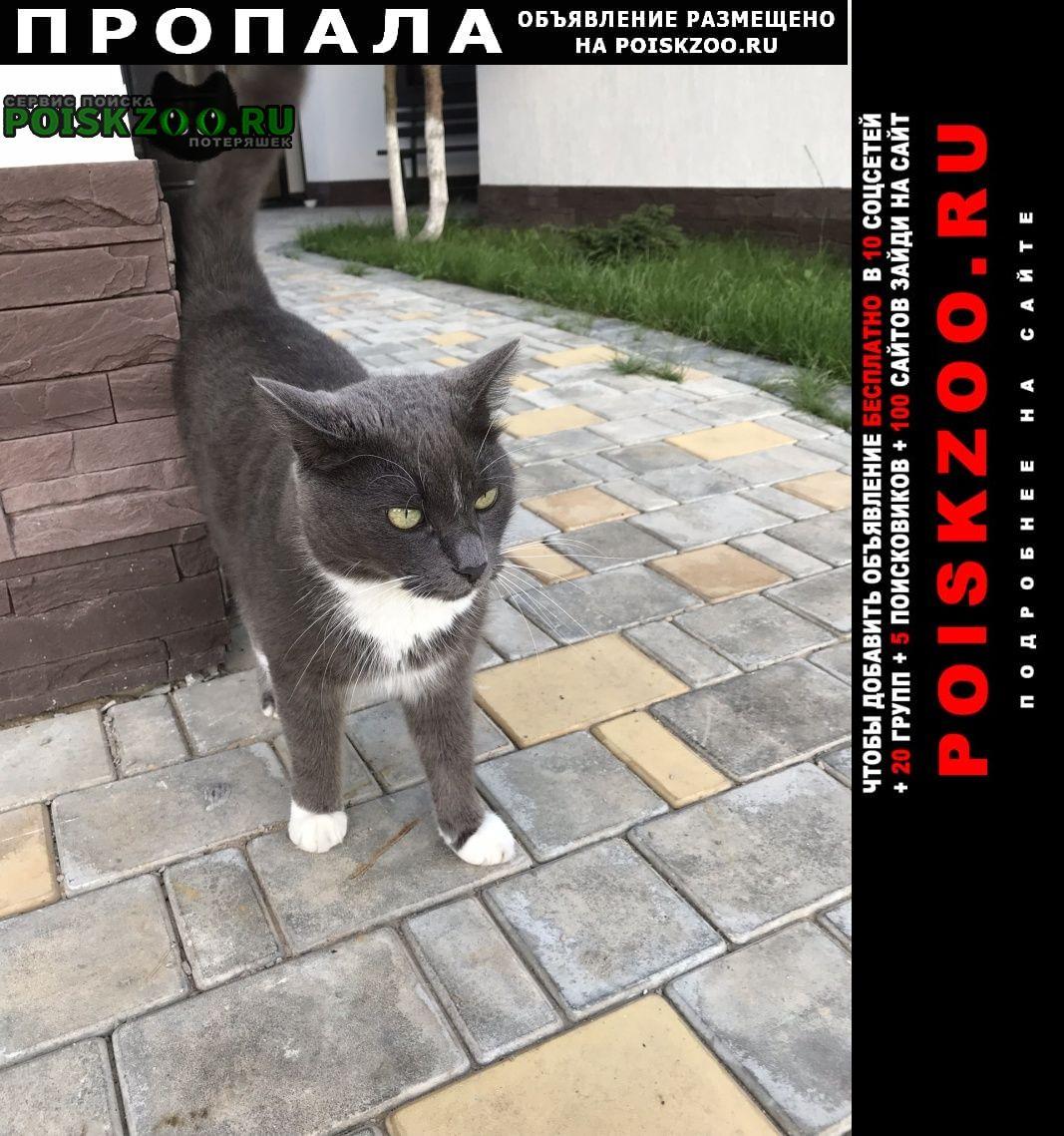 Красногорск Пропала кошка кот