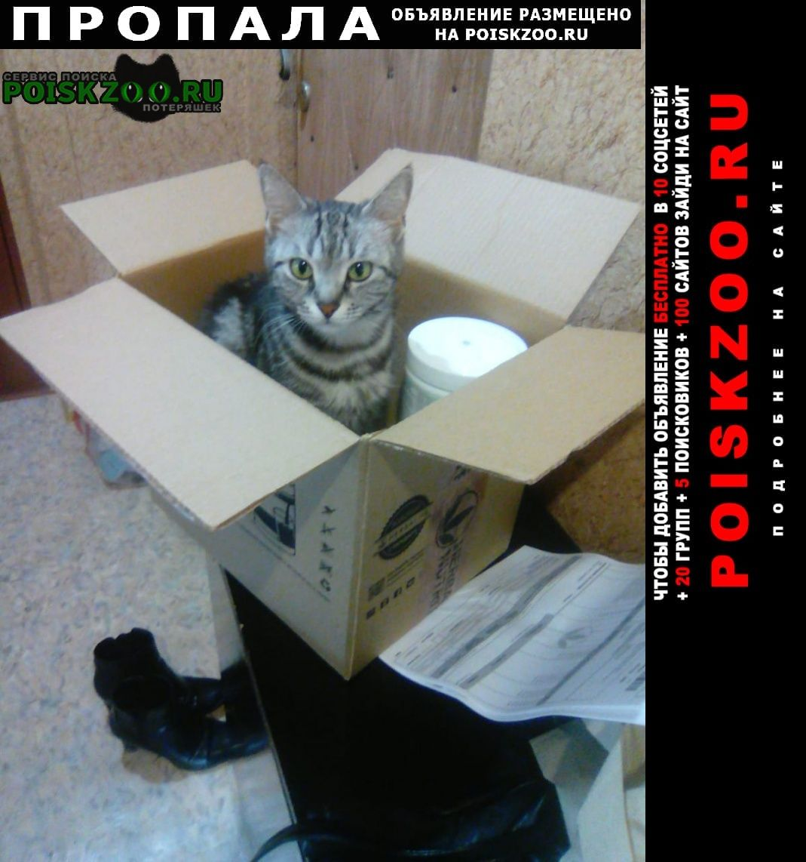 Пропала кошка Черкесск Карачаево-Черкесская Республика