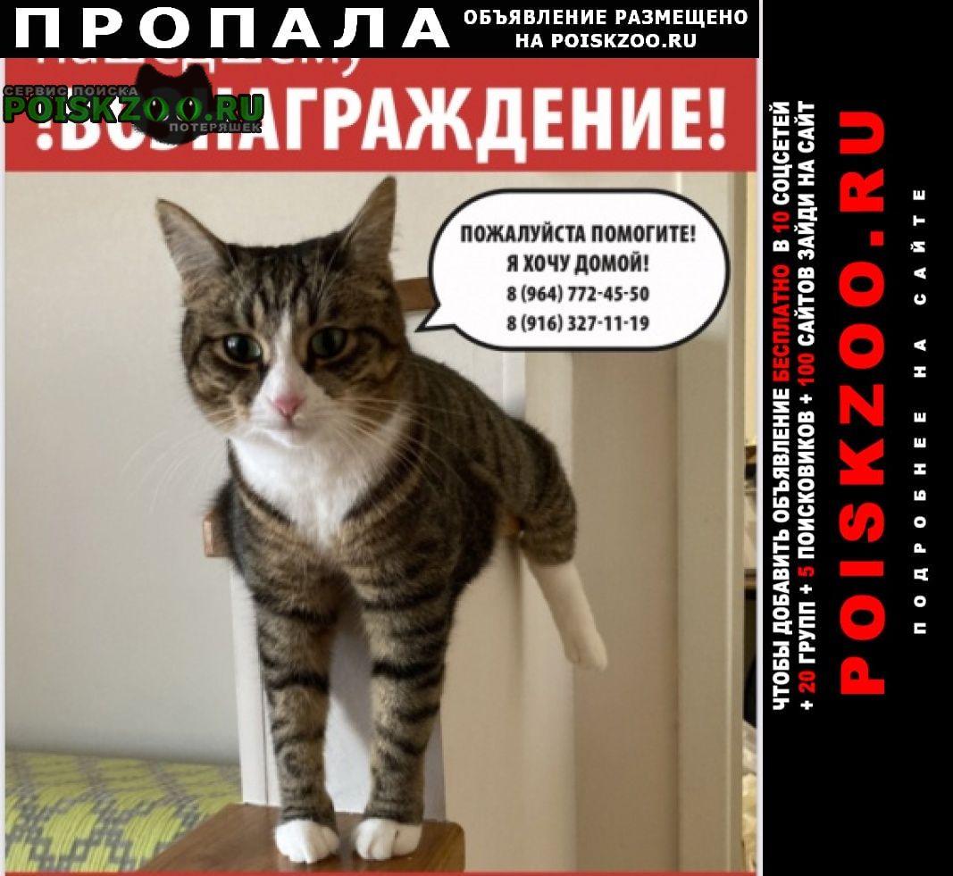 Пропала кошка пожалуйста помогите Москва