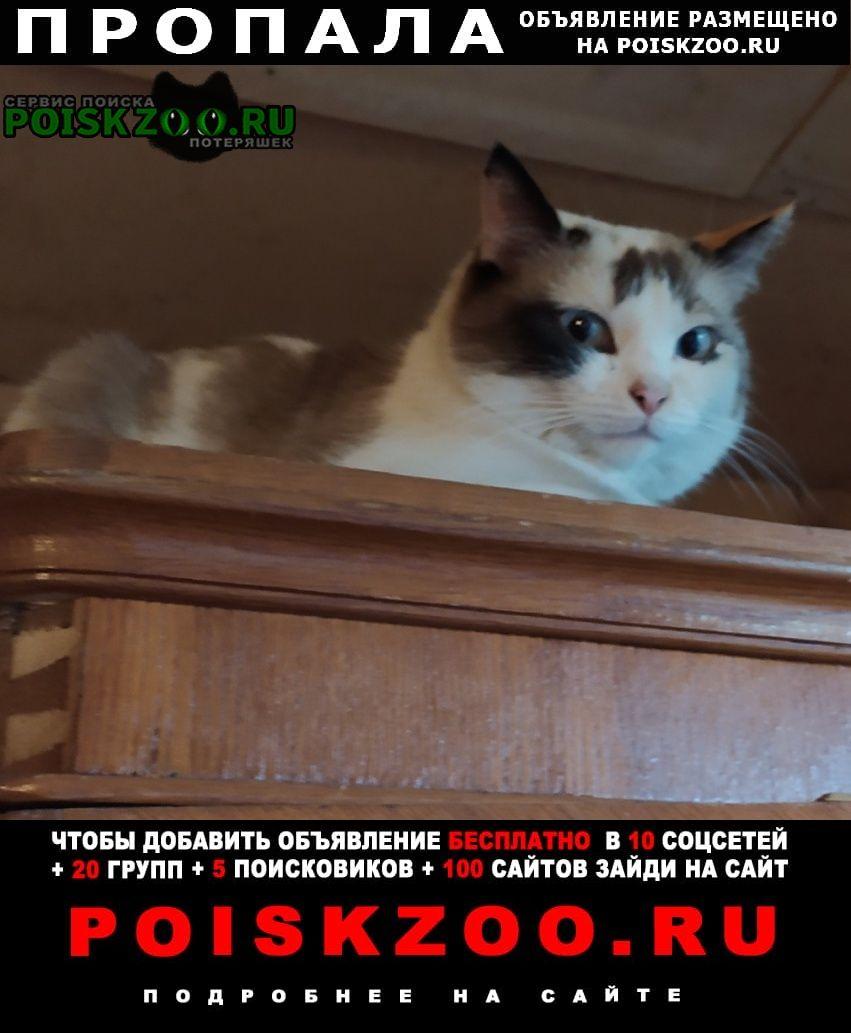 Казань Пропала кошка