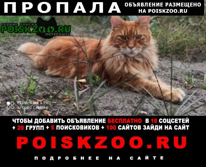 Пропал кот Черкассы