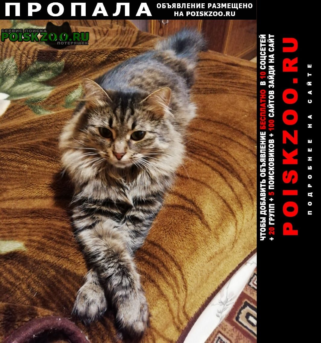Пропала кошка Видное
