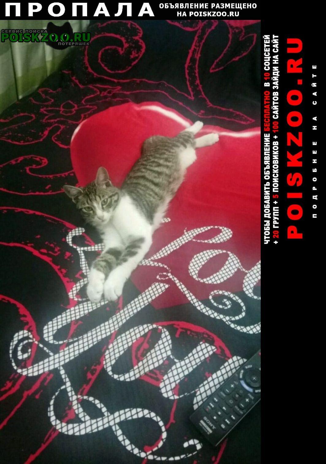 Пропала кошка кот на мацесте 4го января Сочи