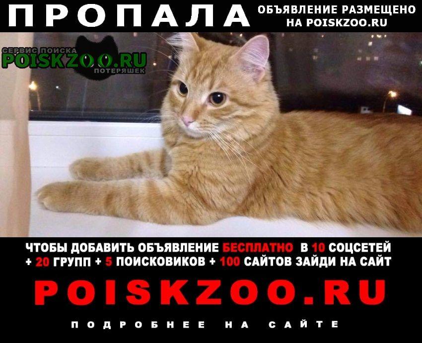Кашира Пропала кошка рыжий кот.