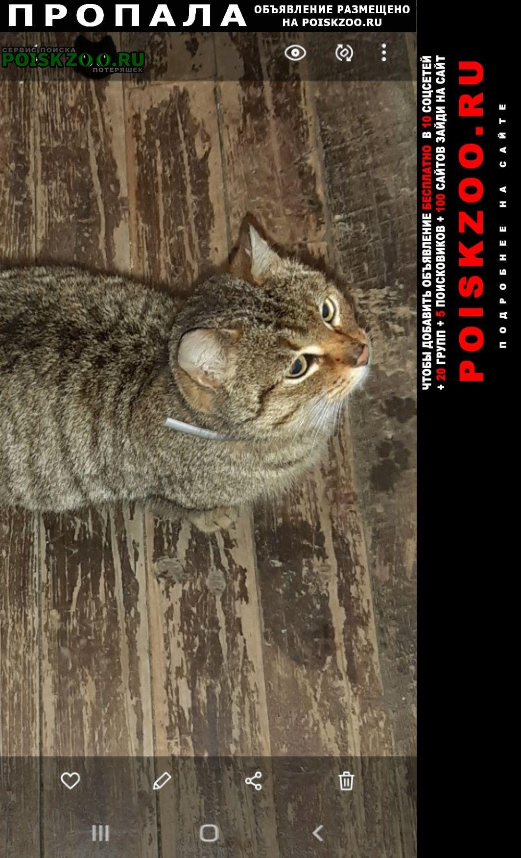 Пропала кошка русиново Боровск