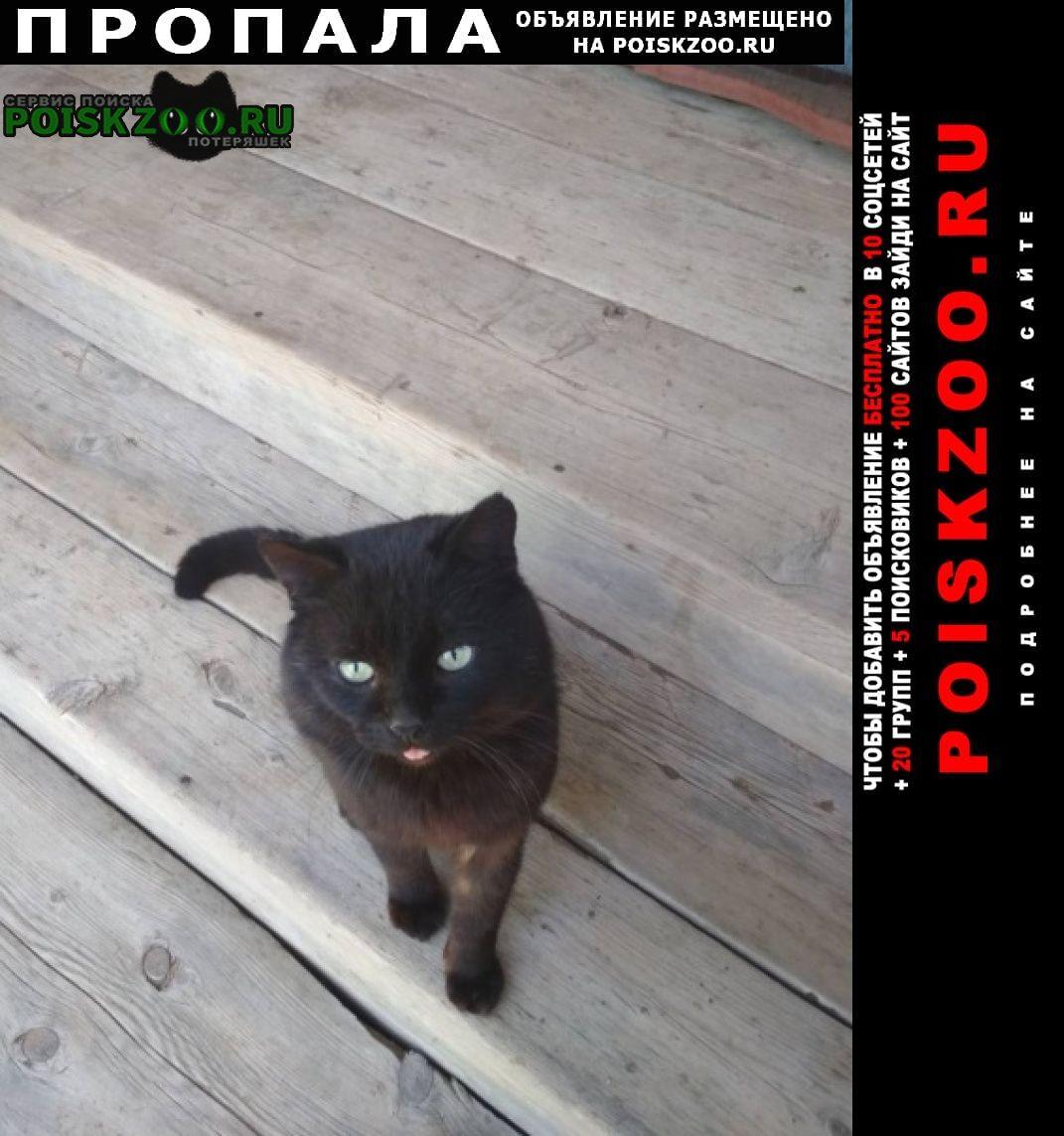 Пропал кот Иловля