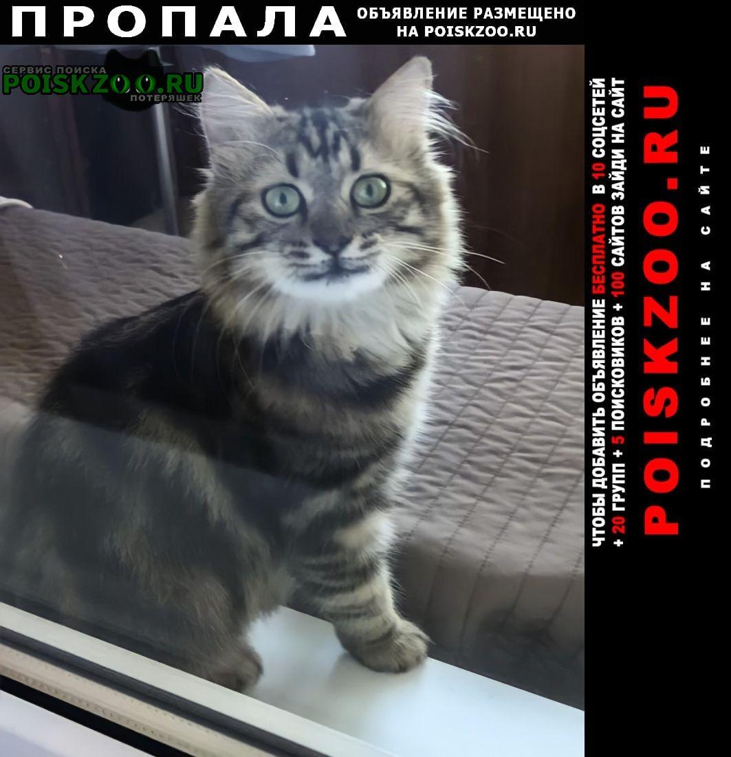 Пропала кошка ещё котёнок 8 месяцев Кропоткин