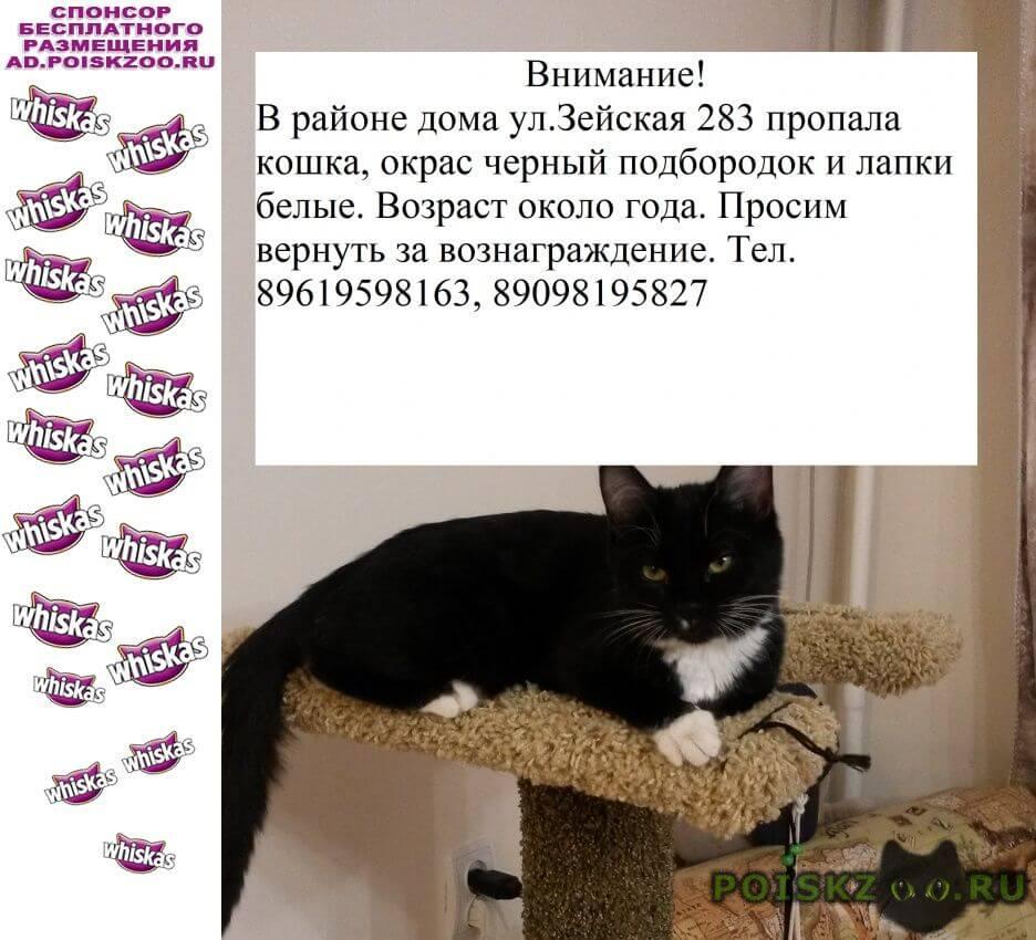 Пропала кошка г.Благовещенск (Амурская обл.)