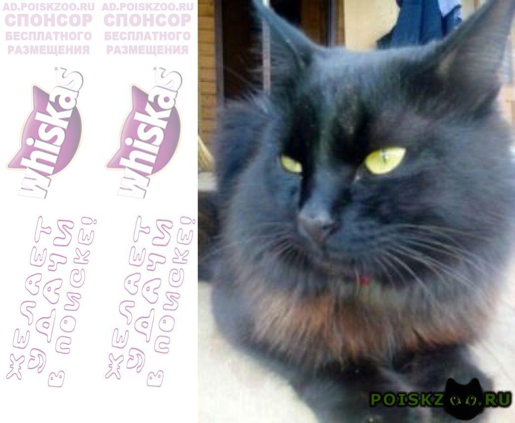 Пропал кот черный г.Домодедово