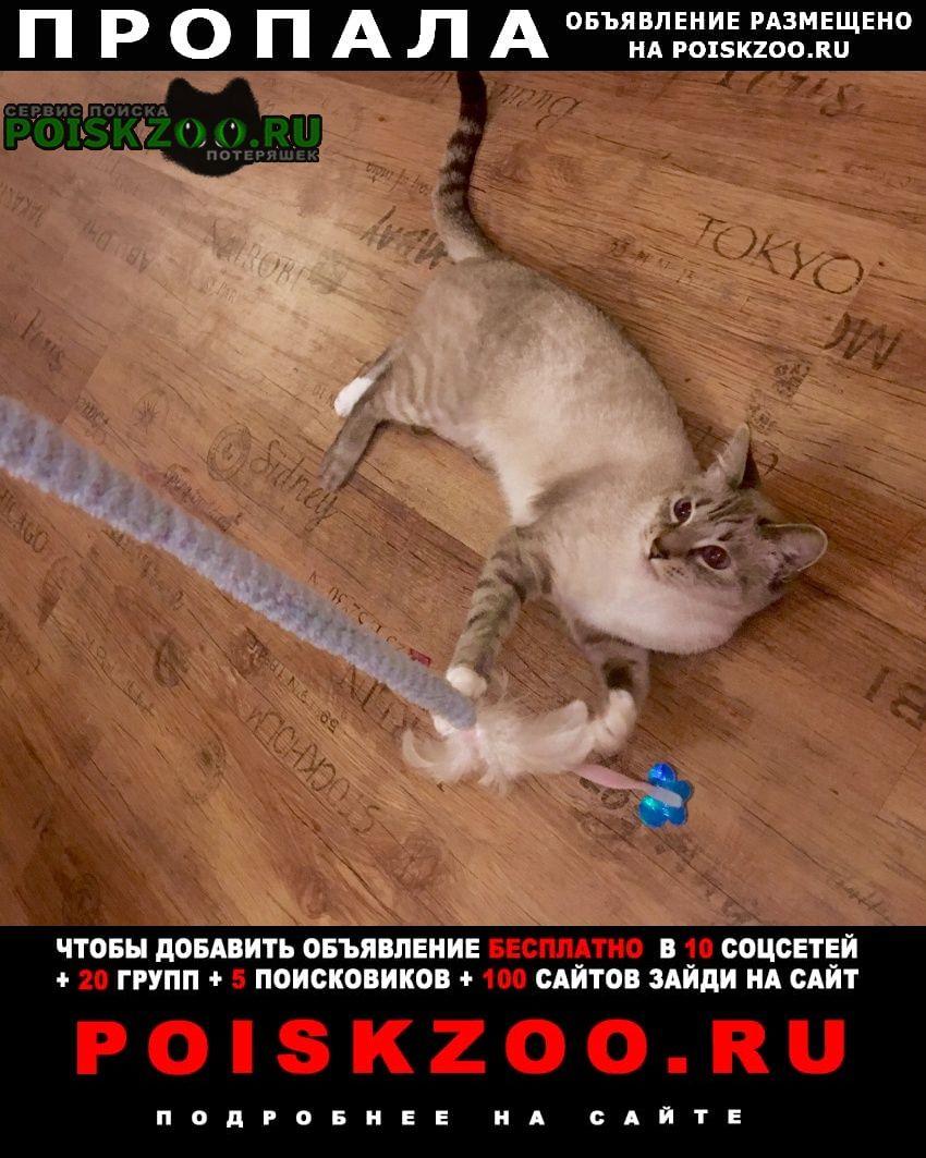 Пропала кошка серая полосатая с белыми лапками Екатеринбург