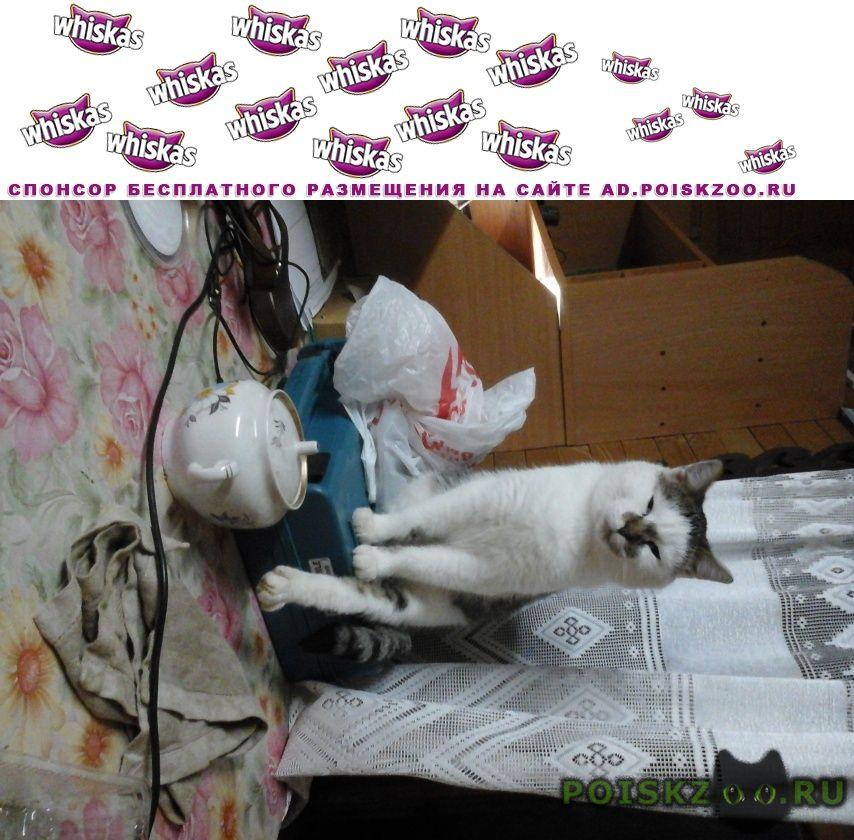 Пропал кот перчик г.Гатчина
