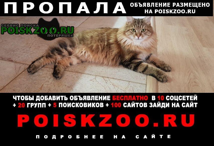 Пропал кот без хвостика Верхняя Пышма