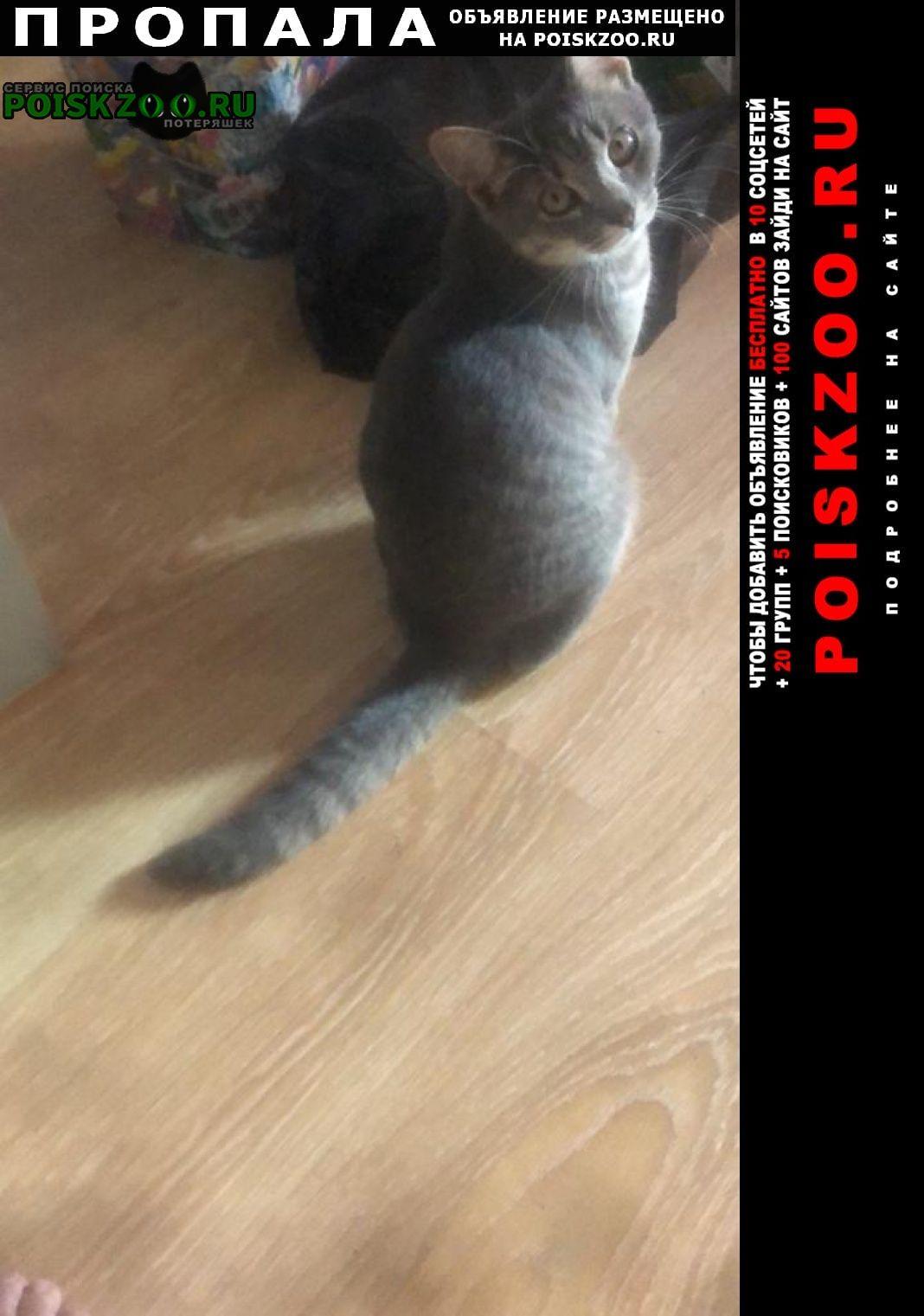 Пропала кошка.. Москва