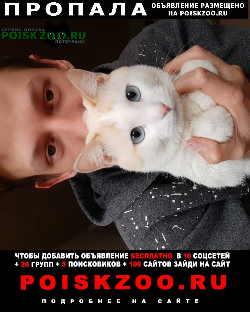 Пропала кошка кот белый голубоглазый красивый Оренбург