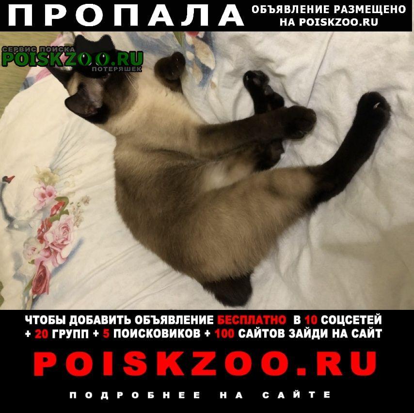 Архангельск Пропала кошка прощу помощи в поиске кота