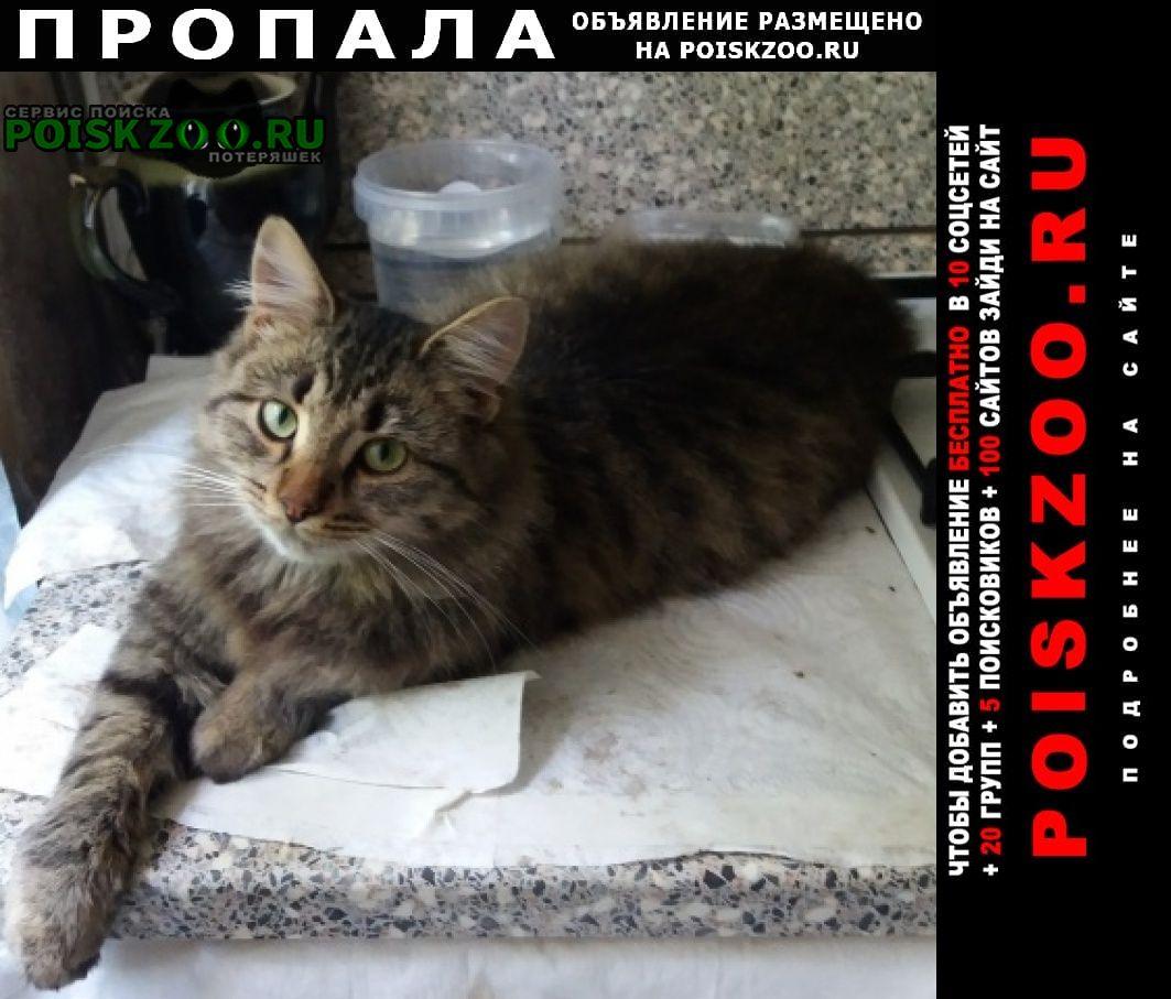 Пропала кошка кот в коптево. Москва