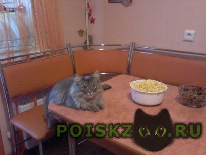 Пропал кот г.Саранск