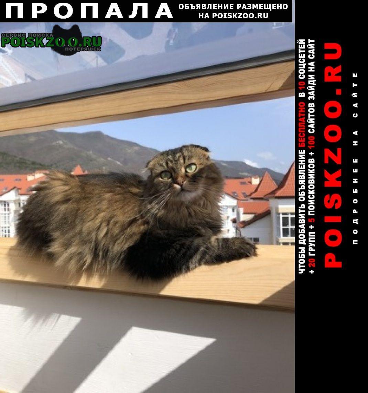 Геленджик Пропал кот