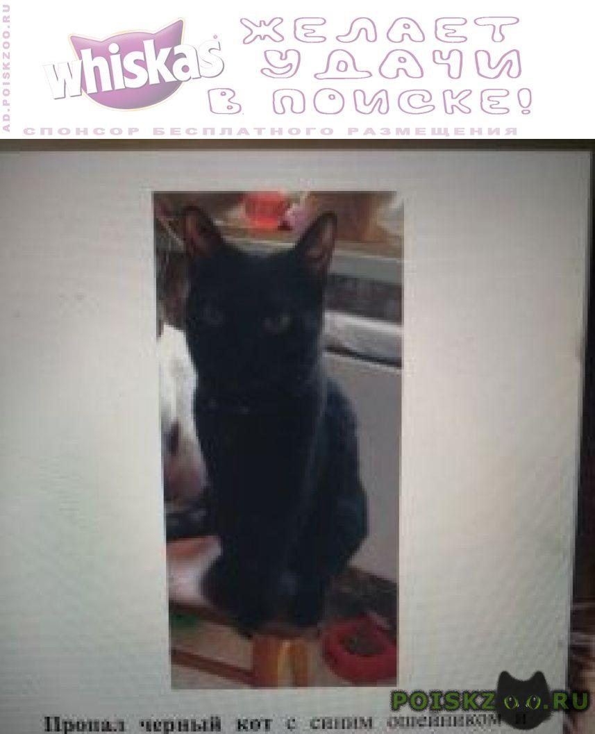 Пропал кот черный на в новых черемушках г.Москва