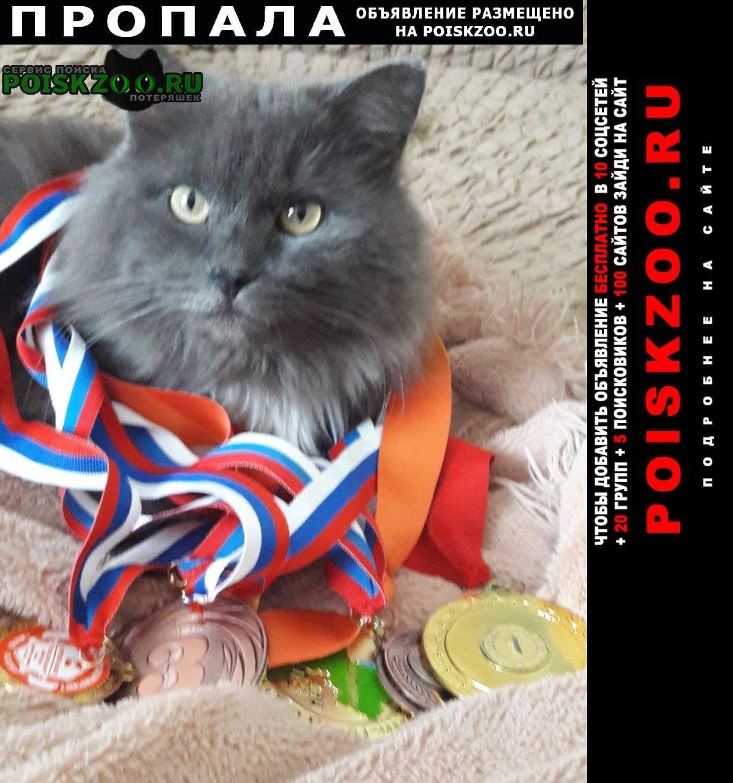 Пропала кошка кот Красноярск