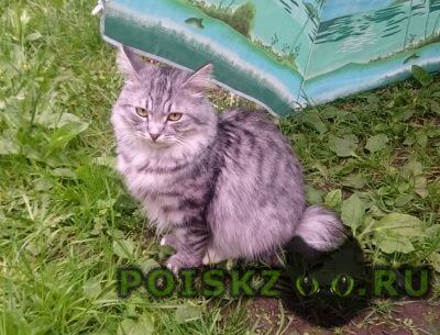 Пропал кот г.Одинцово
