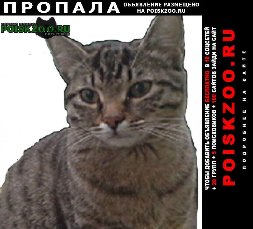 Москва Пропала кошка с коротким хвостом
