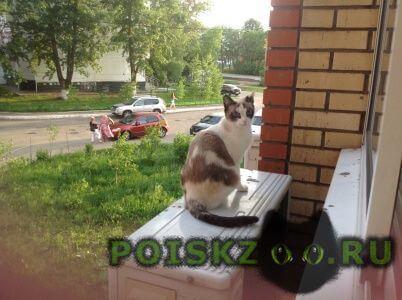 Пропала кошка помогите г.Сергиев Посад