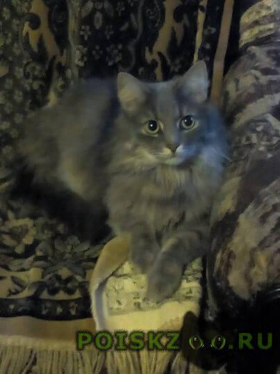 Пропал кот  г.Ярославль