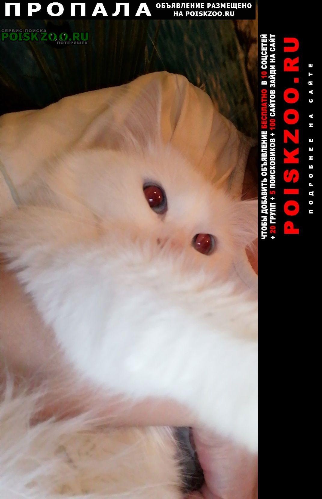 Пропала кошка Смоленск