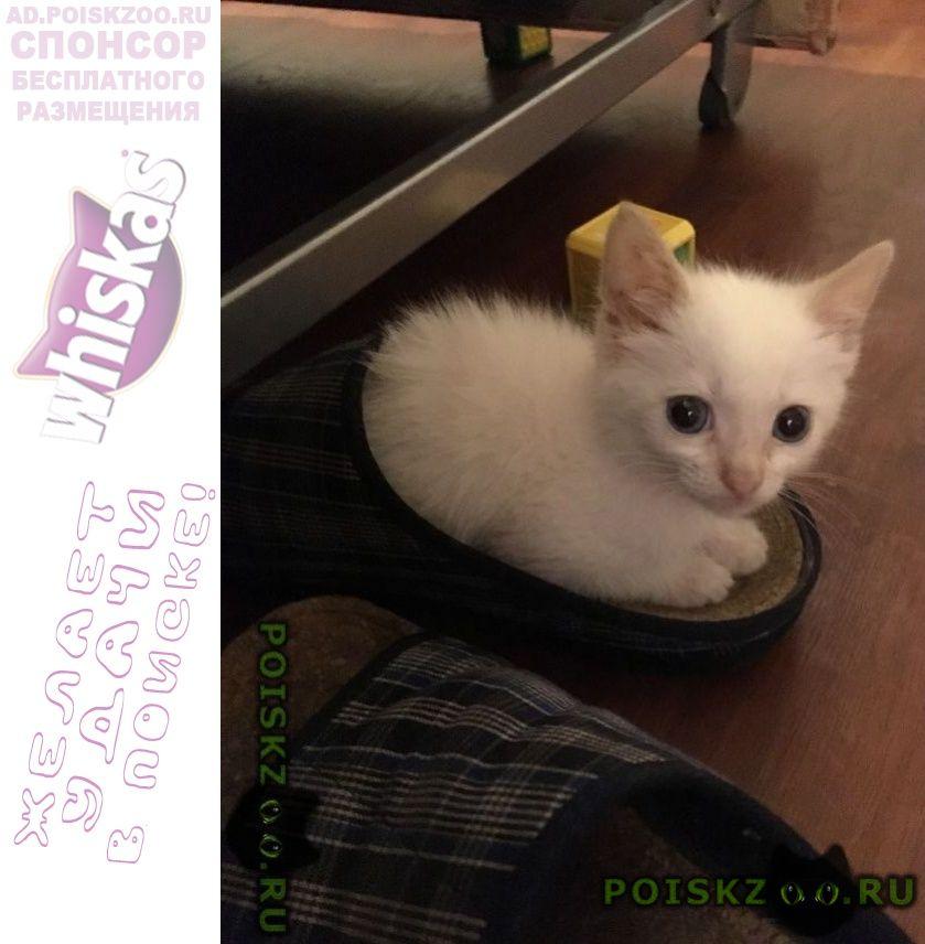 Пропала кошка пропола г.Дорохово