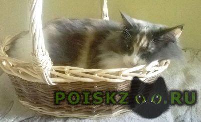 Пропала кошка помогите вернуть домой фенечку г.Александров