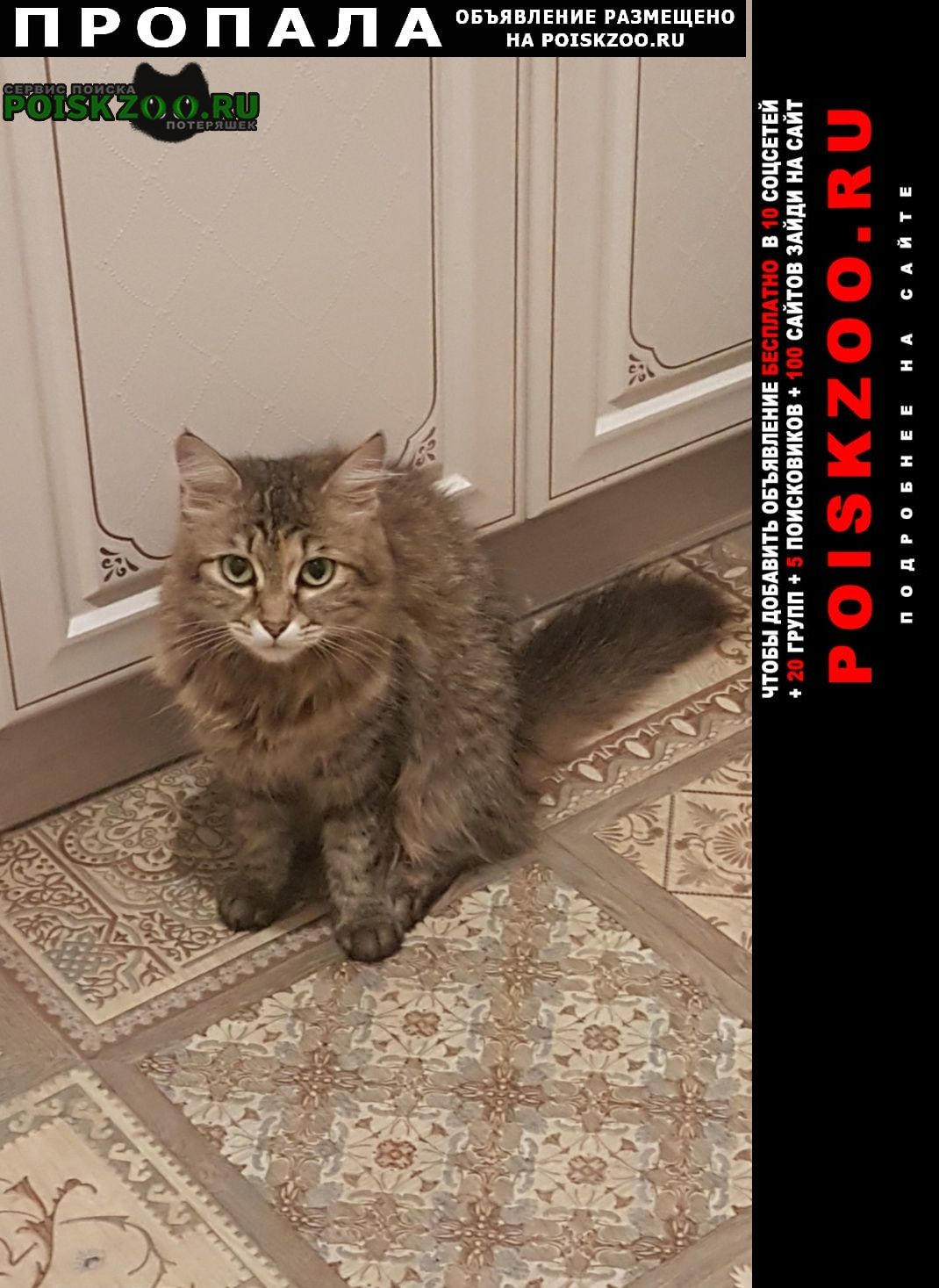 Краснодар Пропала кошка, помогите найти любимую кошечку