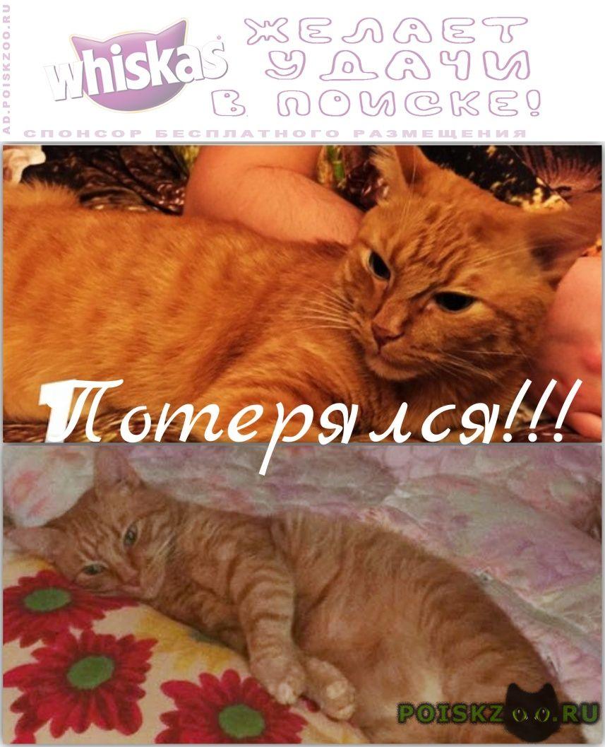 Пропал кот рыжий . г.Подольск