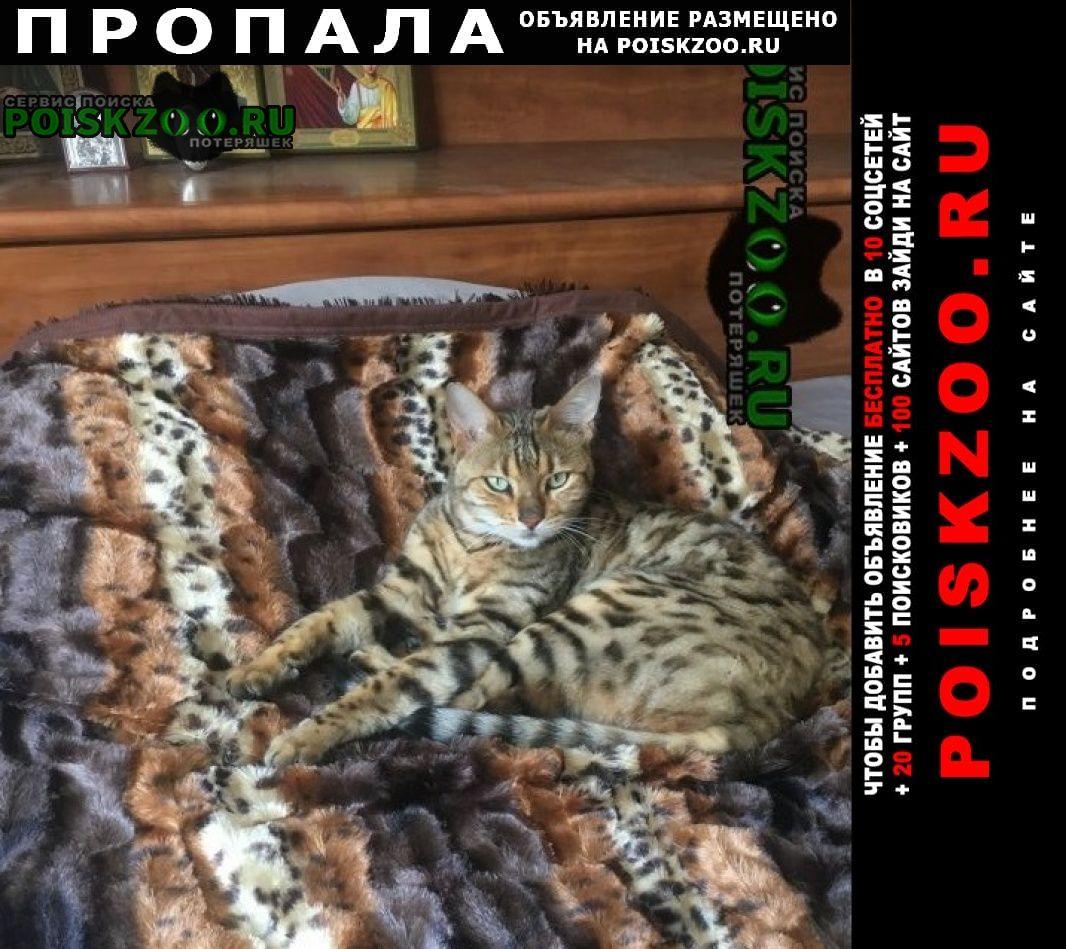 Пропала кошка пос.пригородный ул.лесная г.Оренбург