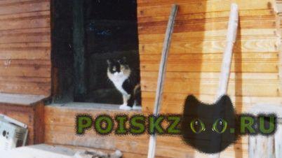 Пропала кошка г.Череповец
