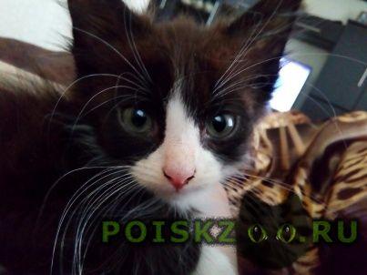 Пропала кошка г.Смоленск