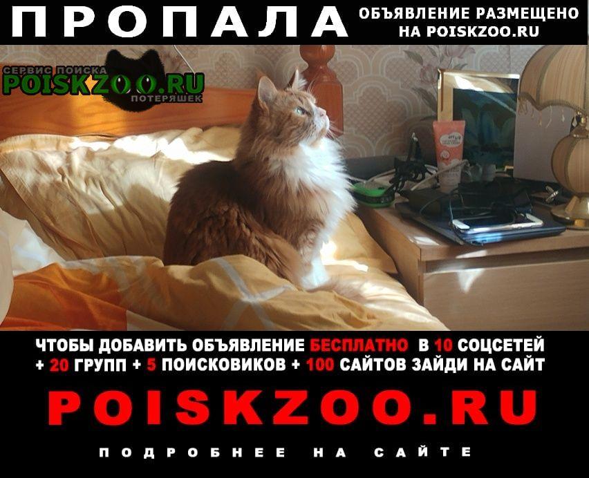Вязники Пропал кот рыжик