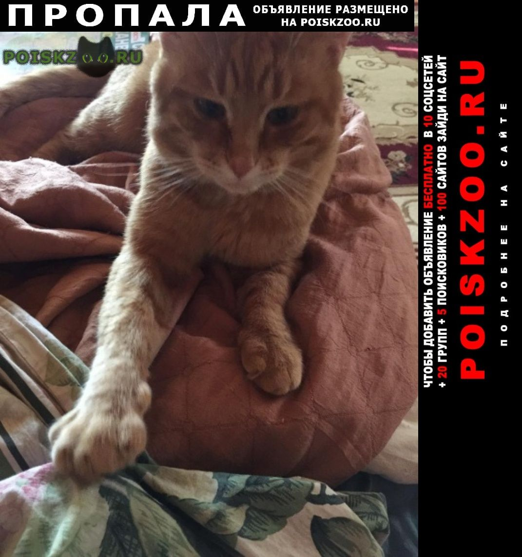 Пропал кот г.Руза