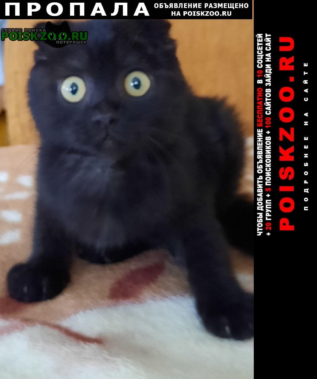 Пропала кошка Борисов