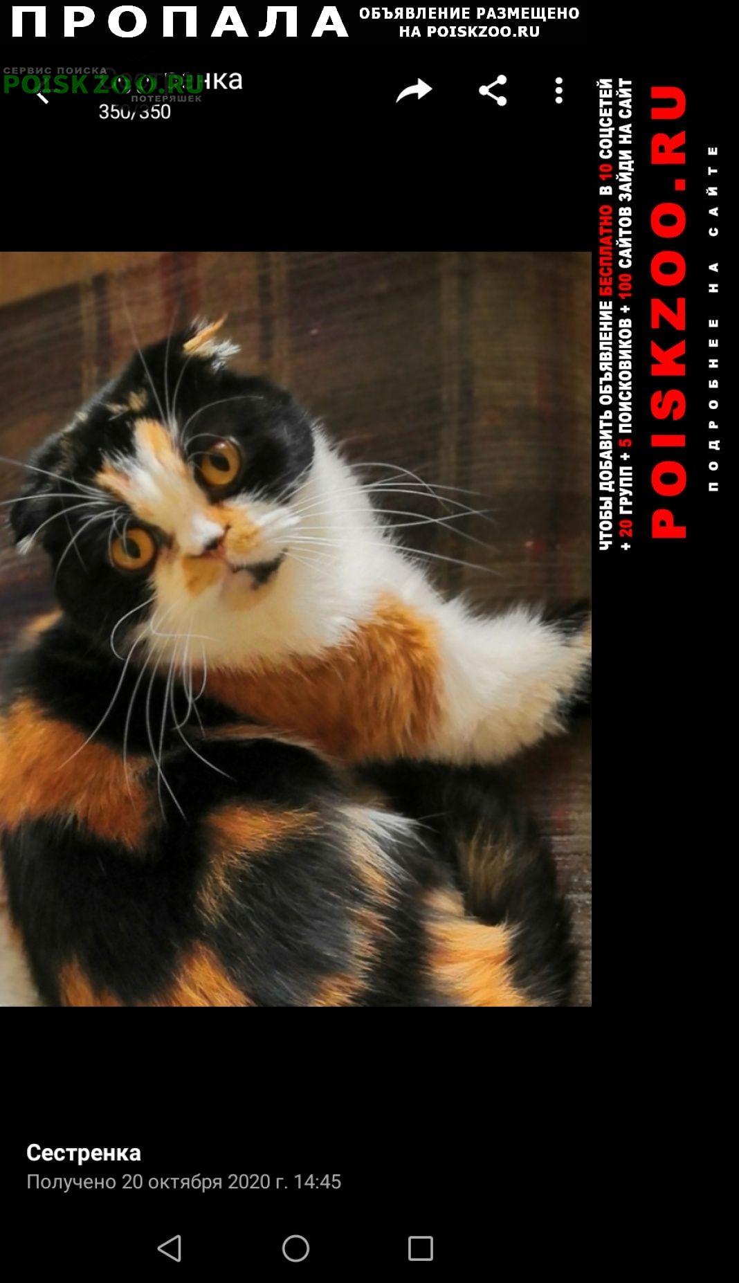 Пропала кошка Нижний Новгород