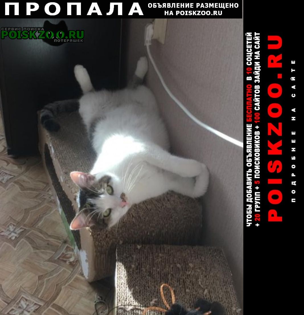 Пропала кошка Новороссийск