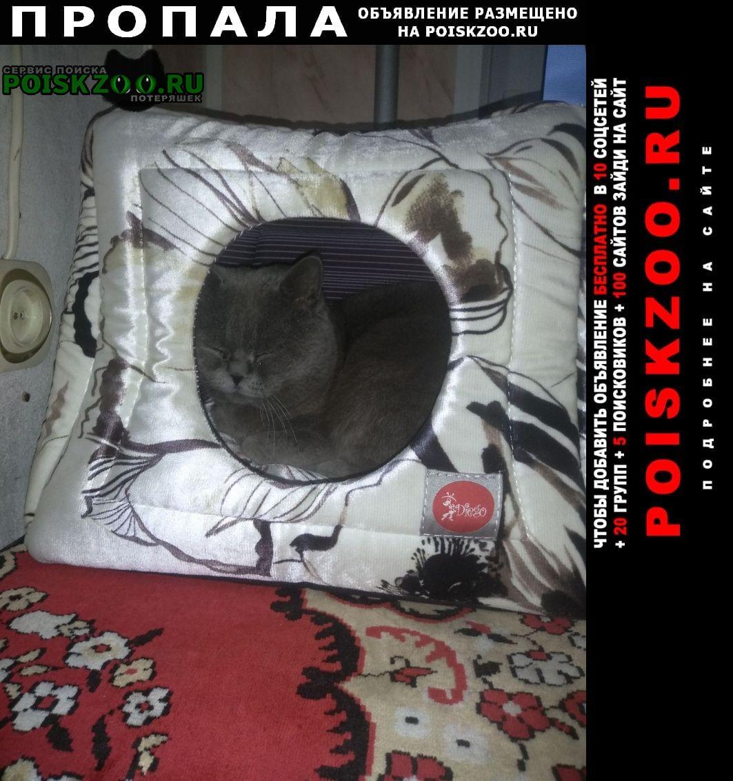 Пропала кошка пропав кіт, район седова Черкассы
