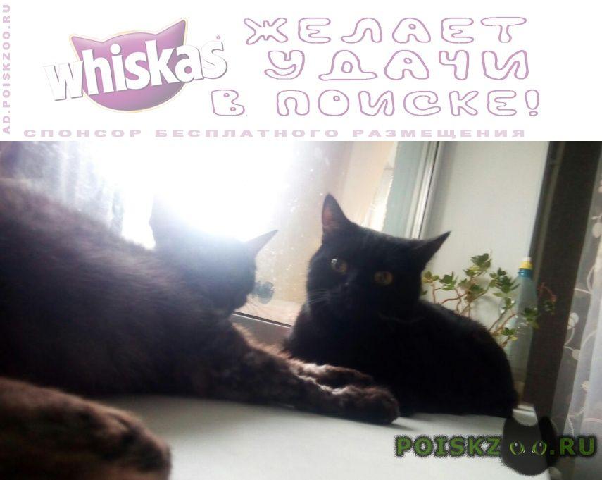 Пропал кот черный на трассе каменск-у г.Каменск-Уральский